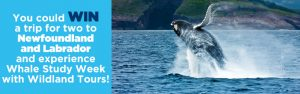 The Toronto Star Wonderlist – Win a trip for 2 to Newfoundland and Labrador valued at $10,580 CDN