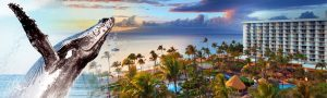 Hawaii – Win a trip for 2 to Maui, Hawaii with flights & accommodation.jpg
